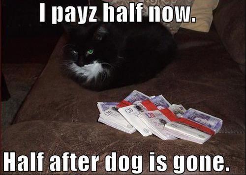 I payz half now...